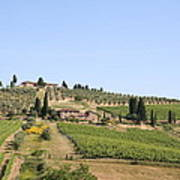 Tuscany Vineyard Art Print