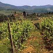 Tuscany Vineyard No.2 Art Print