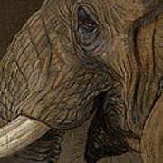 Tusker Art Print by Aaron Blaise