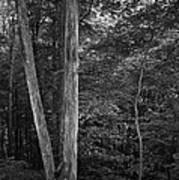Twilight Woods #1 Art Print
