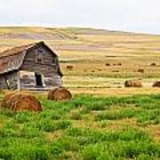Twisted Barn On Canadian Prairie, Big Art Print