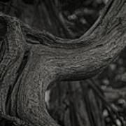 Twisted Tree Art Print