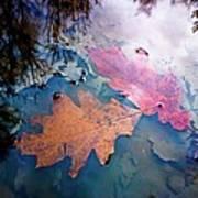 Two Autumn Leaves Art Print