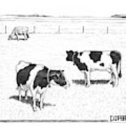 Two Spotted Cows Looking At A Jersey Cow Art Print