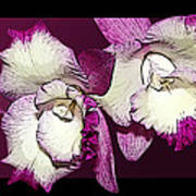 Two Baby Orchids Art Print
