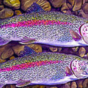 Two Beauties - Trout Art Print by Laird Roberts