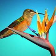 Two Birds Of Paradise Art Print