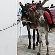 Two Donkeys Tethered In The Street In Art Print
