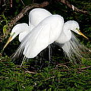 Two Egrets Art Print