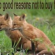 Two Good Reasons Not To Buy Fur Art Print