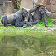 Two Gorillas Relaxing II Art Print