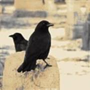 Two Graveyard Blackbirds Art Print