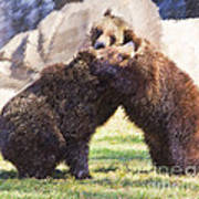 Two Grizzly Bears Ursus Arctos Play Fighting Art Print