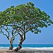 Two Heliotrope Trees On Tropical Beach Art Prints Art Print