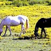 Two Horses Grazing Art Print