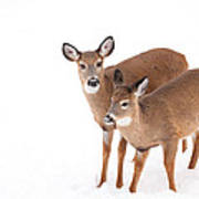 Two In The Snow Art Print