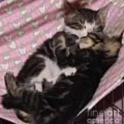 Two Kittens Sleeping Art Print