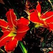 Two Lilies Art Print