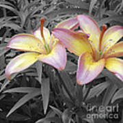 Two Lilies Art Print