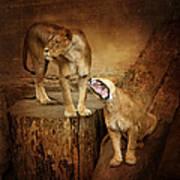Two Lions Art Print