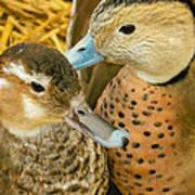 Two Little Ducks Art Print