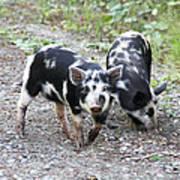 Two Little Pigs Art Print