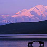 Two Moose Kiss In Wonder Lake Art Print