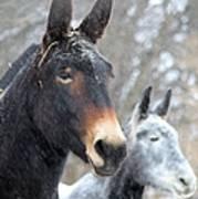 Two Mules For Sister Sara Art Print