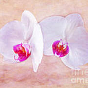 Two Orchids Art Print