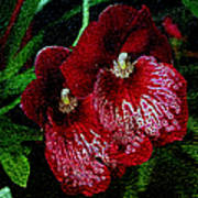 Two Orchids Print by Elizabeth Winter