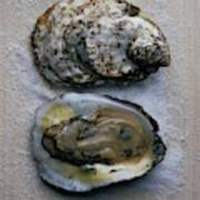 Two Oysters Art Print