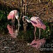 Two Pink Spoonbills Art Print