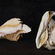 Two Shells Art Print