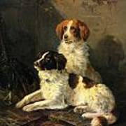 Two Spaniels Waiting For The Hunt Art Print