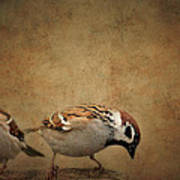 Two Sparrows Art Print