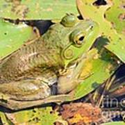 Two Toned Frog Art Print