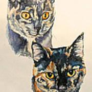Two Torti's Art Print