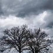 Two Trees Beneath A Dark Cloudy Sky Art Print