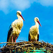 Two White Storks 16 Art Print