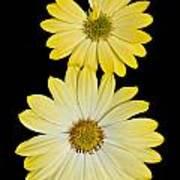 Two Yellow Art Print