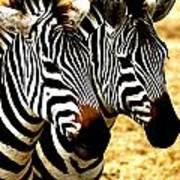 Two Zebras Art Print