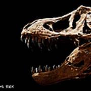 Tyrannosaurus Rex Skull 4 Art Print