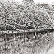 Ueno Park Sakuara Art Print