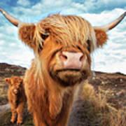 Uk, Scotland, Highland Cattle With Calf Art Print