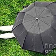 Umbrella Dreams Art Print