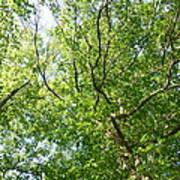 Under Leaf Canopy Art Print