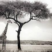 Under The African Sun Art Print