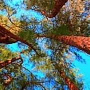 Under The Australian Pines Art Print