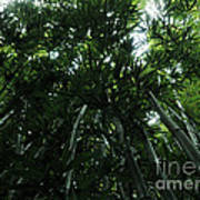 Under The Bamboo Haleakala National Park  Art Print