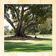 Under The Big Old Tree Art Print